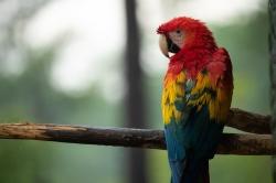 Perth Parrots Floorball Taster